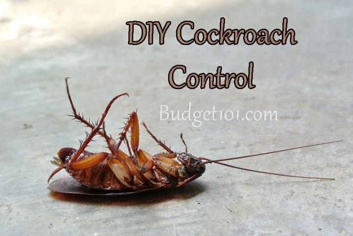 Budget101 timeline photos facebook cockroach control
