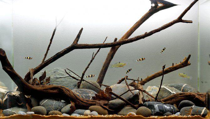 Plantless Aquascapes Page 2 Freshwater Nano Biotope Aquarium