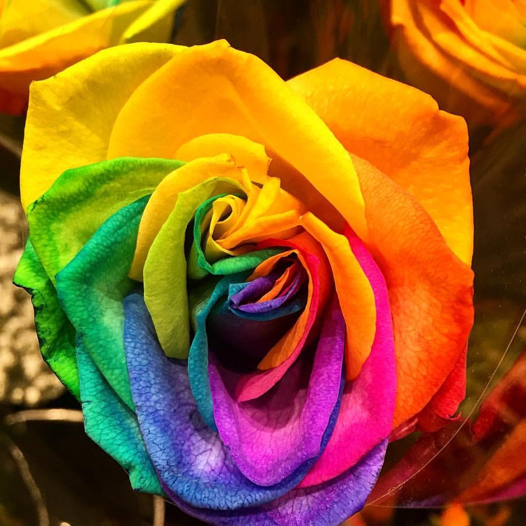 I Found This Rainbow Flower In Shinjuku Rainbow Flowers