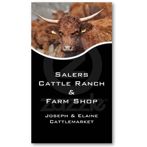 Horned salers cow with black panel business card business cards salers cow cattle farm or ranch business card colourmoves