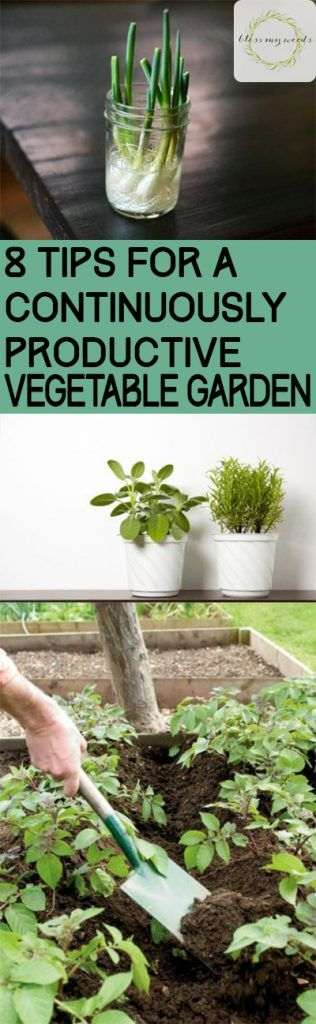 8 Tips For A Continuously Productive Vegetable Garden