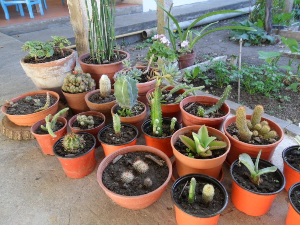 mi jardín espinoso