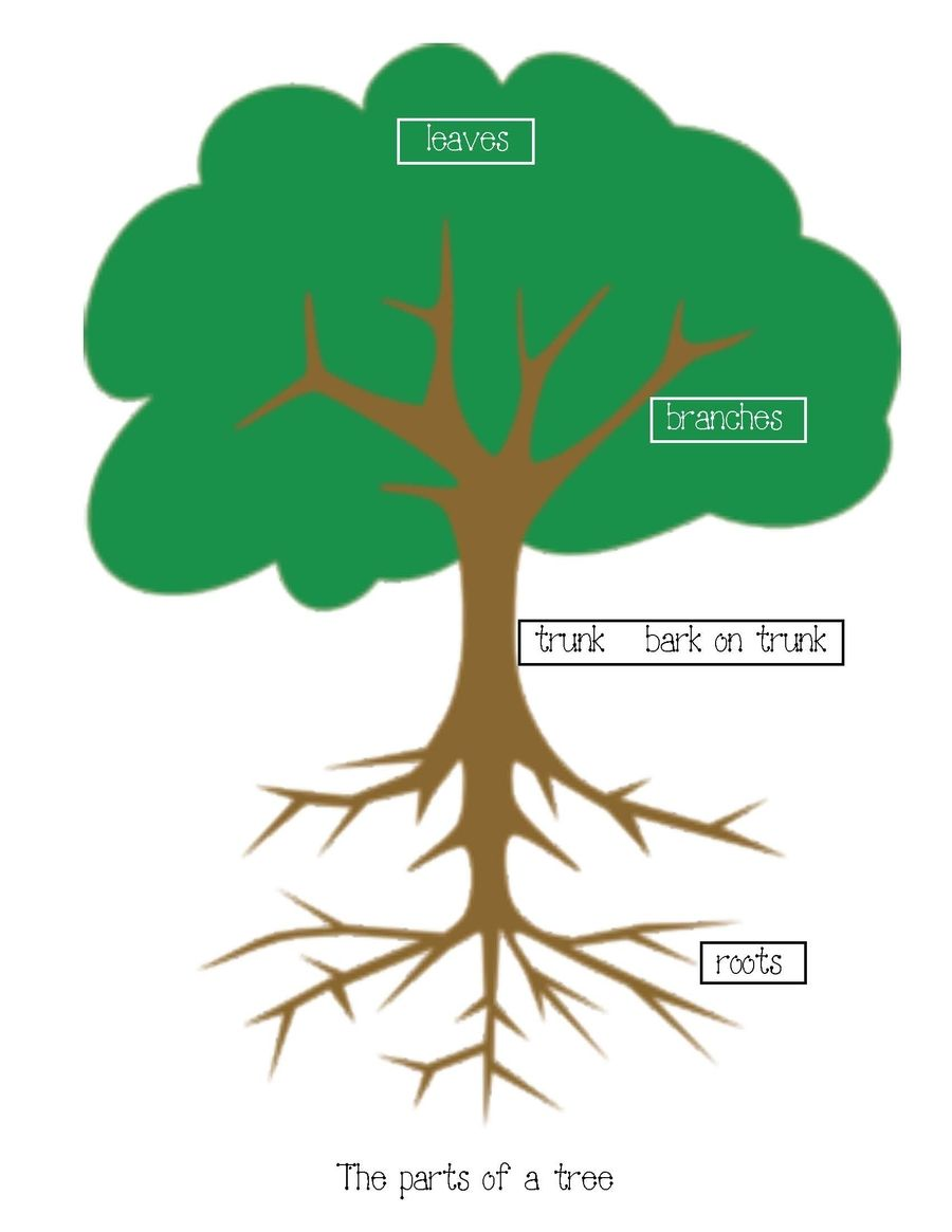 Parts Of A Tree Poster Activity | Activities, Anchor charts and Pre ...