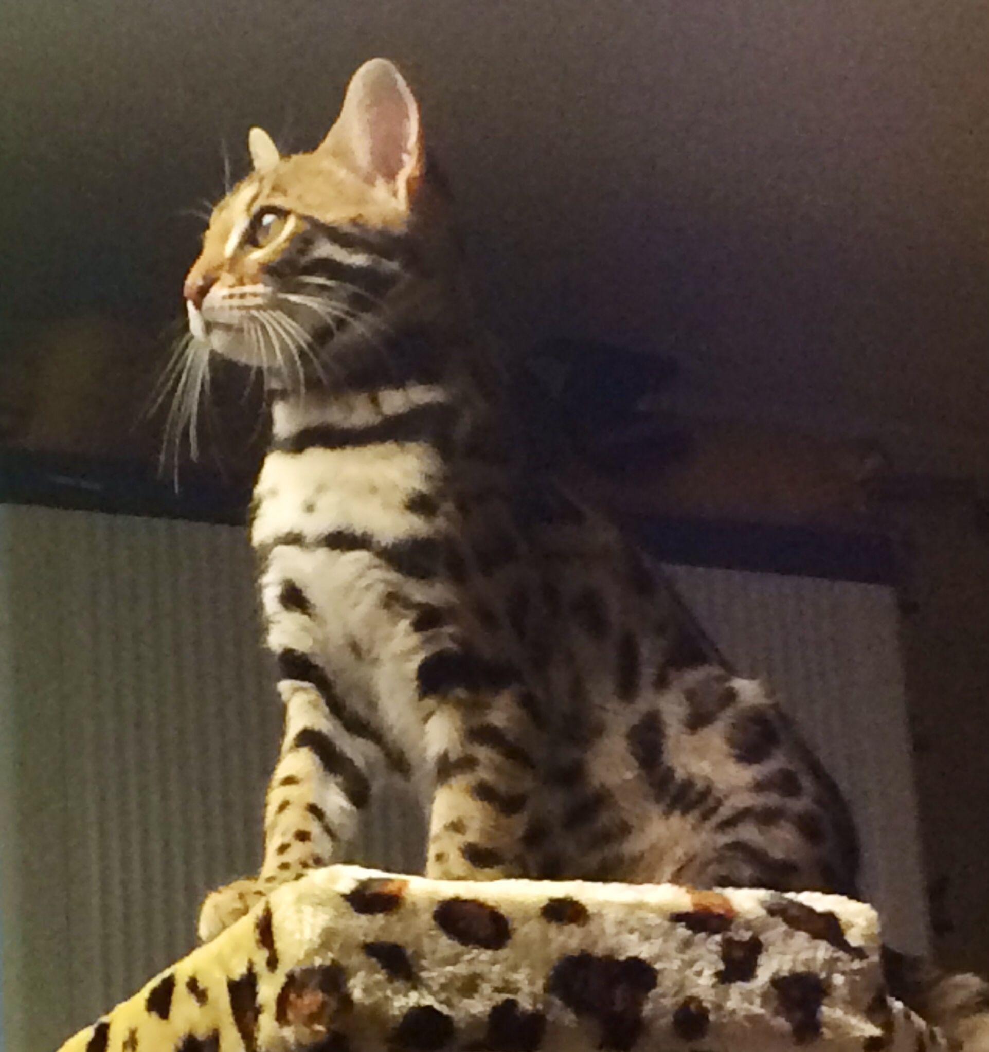Princess Nala at 4 months Animals, Beautiful, Cats