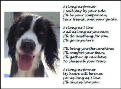 In memory of my beautiful  Springer Scout. This one made me cry.