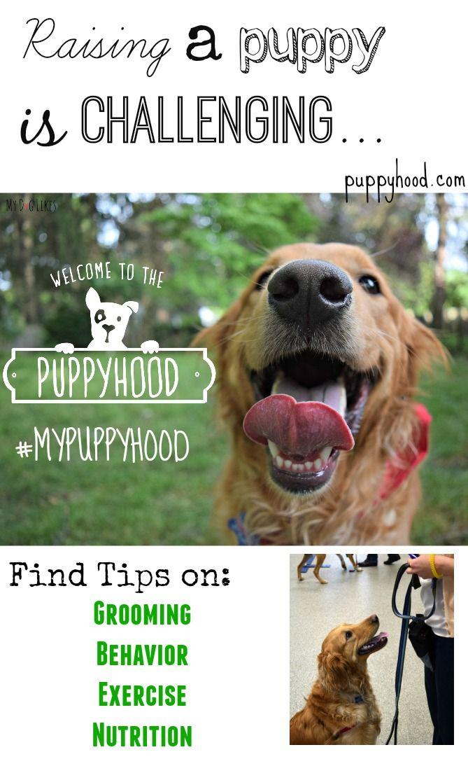 It S All Good In Mypuppyhood Puppies Dog Training Puppy