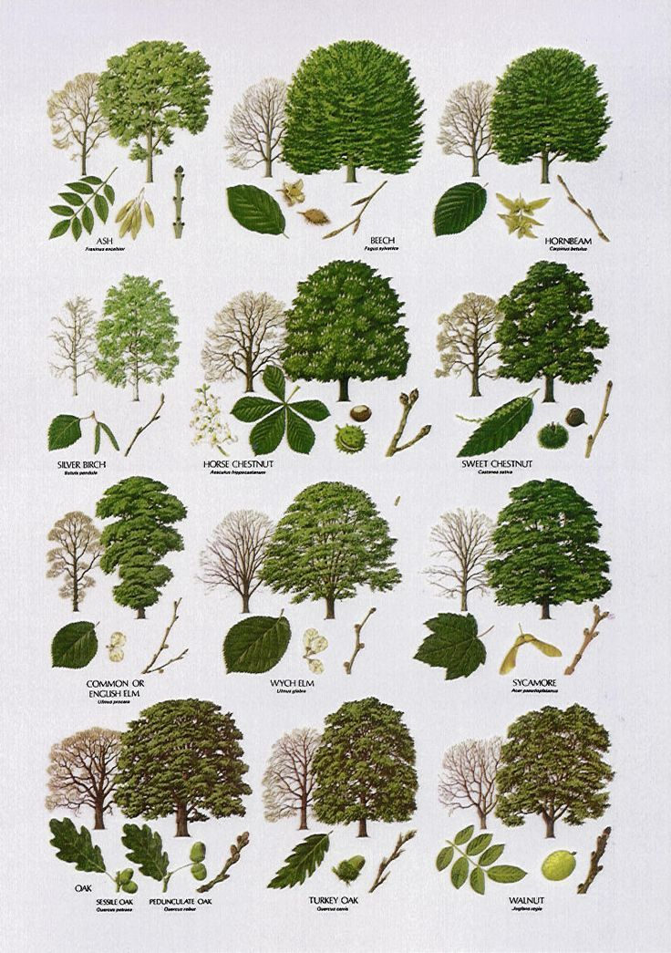 indigenous markings | Ideas for the House | Pinterest | Trees ...