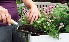 Balkonblumen: Fantasievoll Kombiniert | Inspiration Balkonblumen Pflanzen Kalten Jahreszeit
