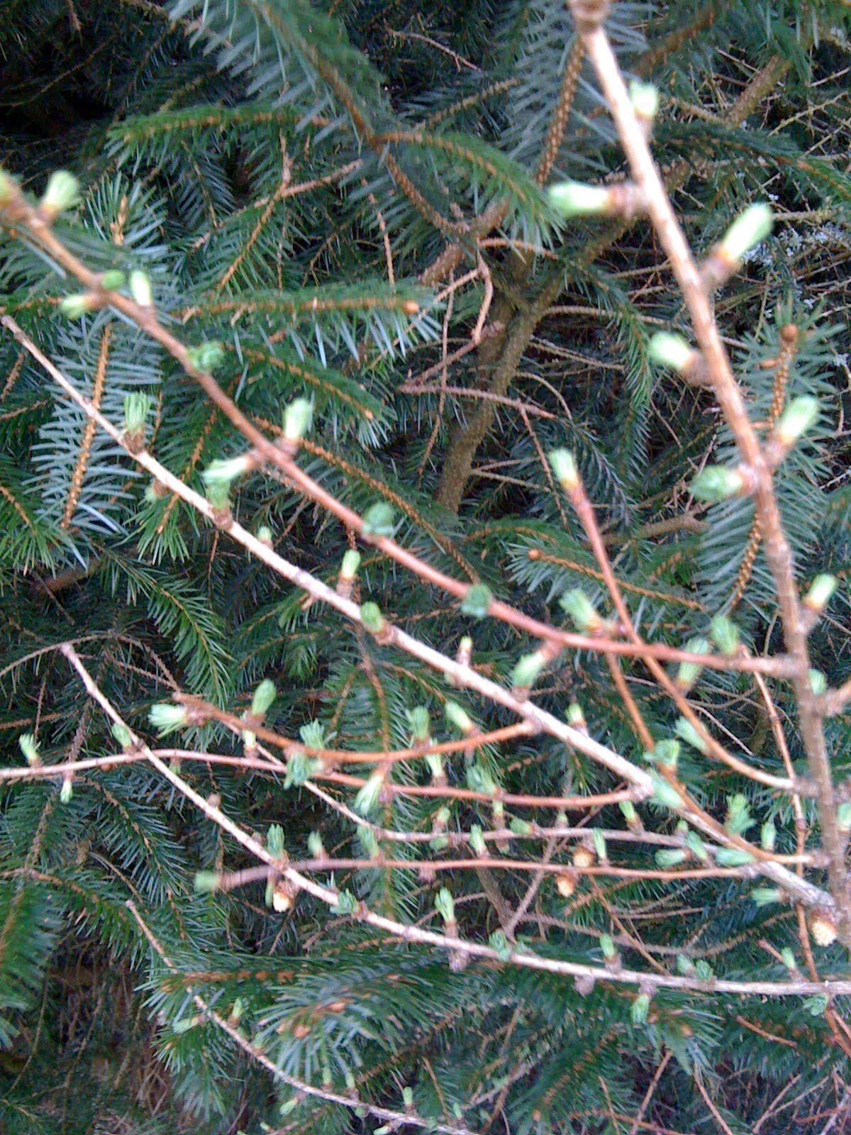 Fibonacci Nature, Homeschool math, Outdoor