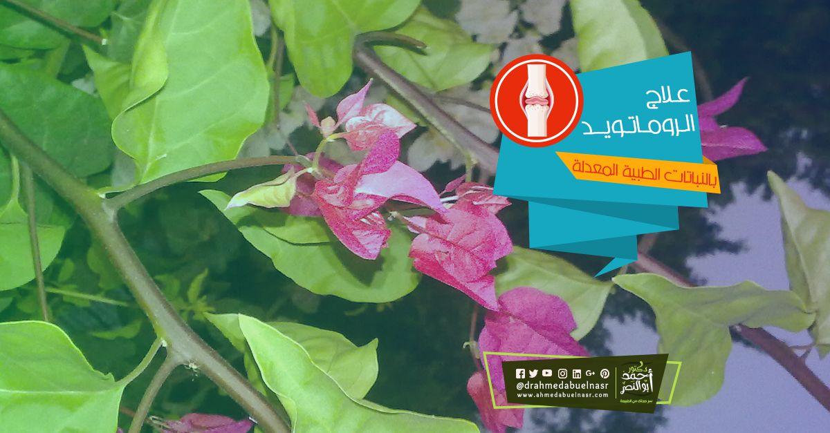 الدكتور احمد ابو النصر Convenience Store Products