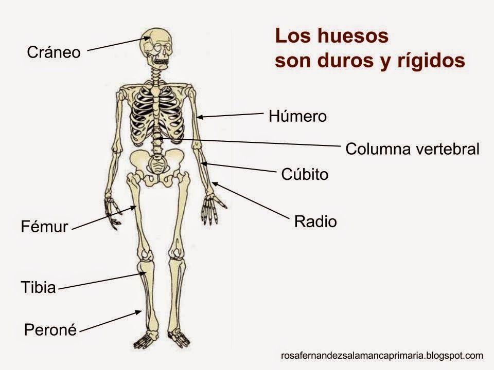Maestra de Primaria: Nuestro cuerpo. Huesos, articulaciones ...