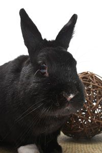 Entertain your rabbit with these toys and games.