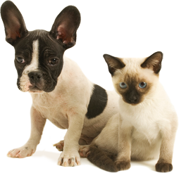 Cat And Dog Coverage Meds For Dogs Pets Dogs