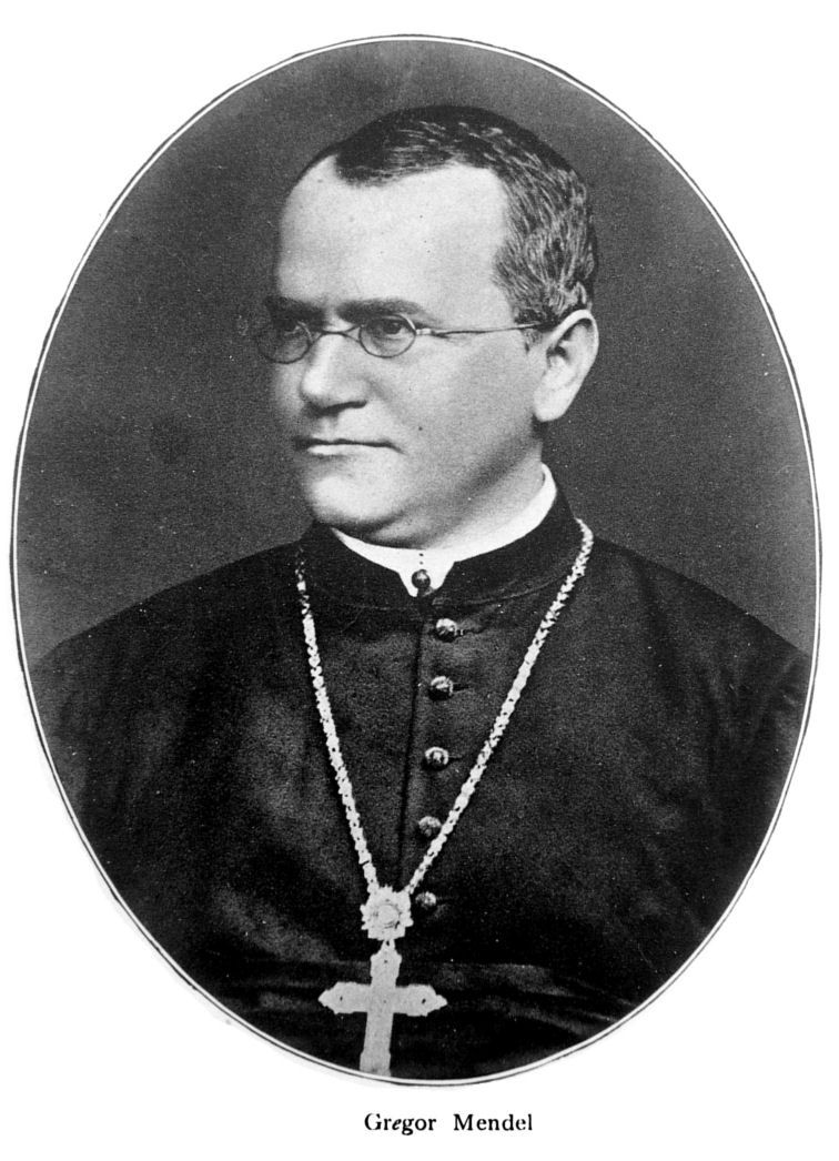 a biography of gregor johann mendel the founder of the modern science of genetics Gregor johann mendel was born on july 20th, 1822 in the austrian empire, now  the czech republic  mendel is known for pea-plant experiments and  subsequent theories on genetics  history of science: each scientist is almost  always inspired by earlier work  after university, mendel taught at brünn  modern school.