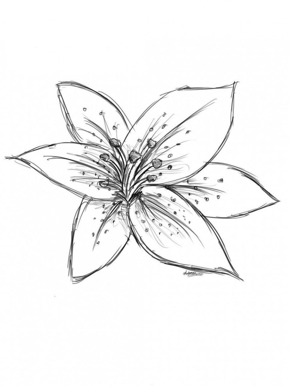 Pin by on Flower Nifty Lilies drawing