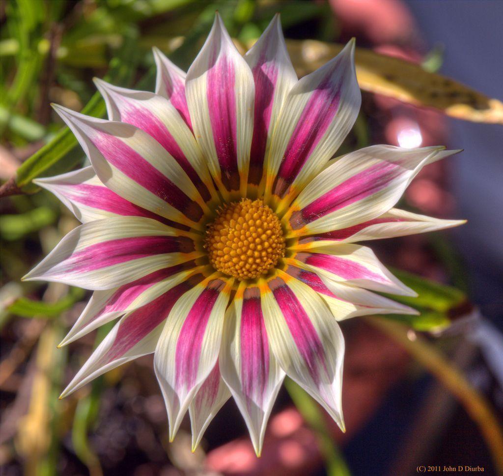 Фото очень красивых и необычных цветов