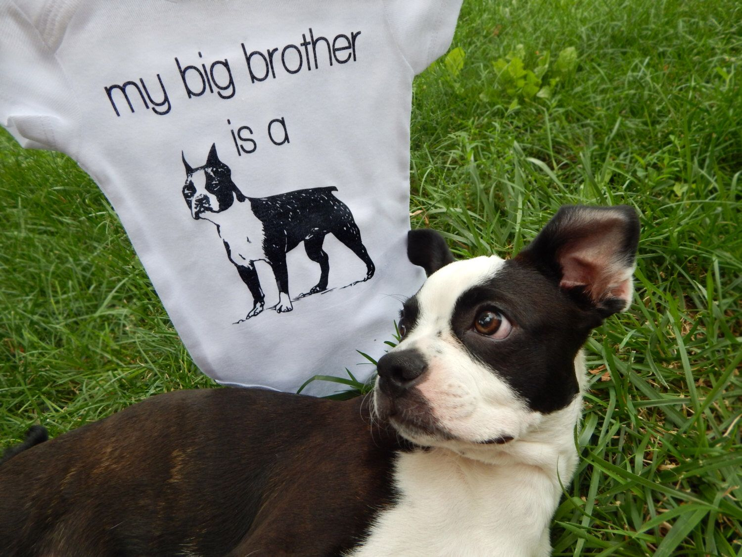 Boston Terrier Baby Clothes, Big Brother Dog Shirt, Boston Terrier Gifts, Dog Big Brother Shirt, Dog Baby Clothes, Baby Girl, Baby Boy by EmeeJoCo on Etsy https://www.etsy.com/listing/194348351/boston-terrier-baby-clothes-big-brother