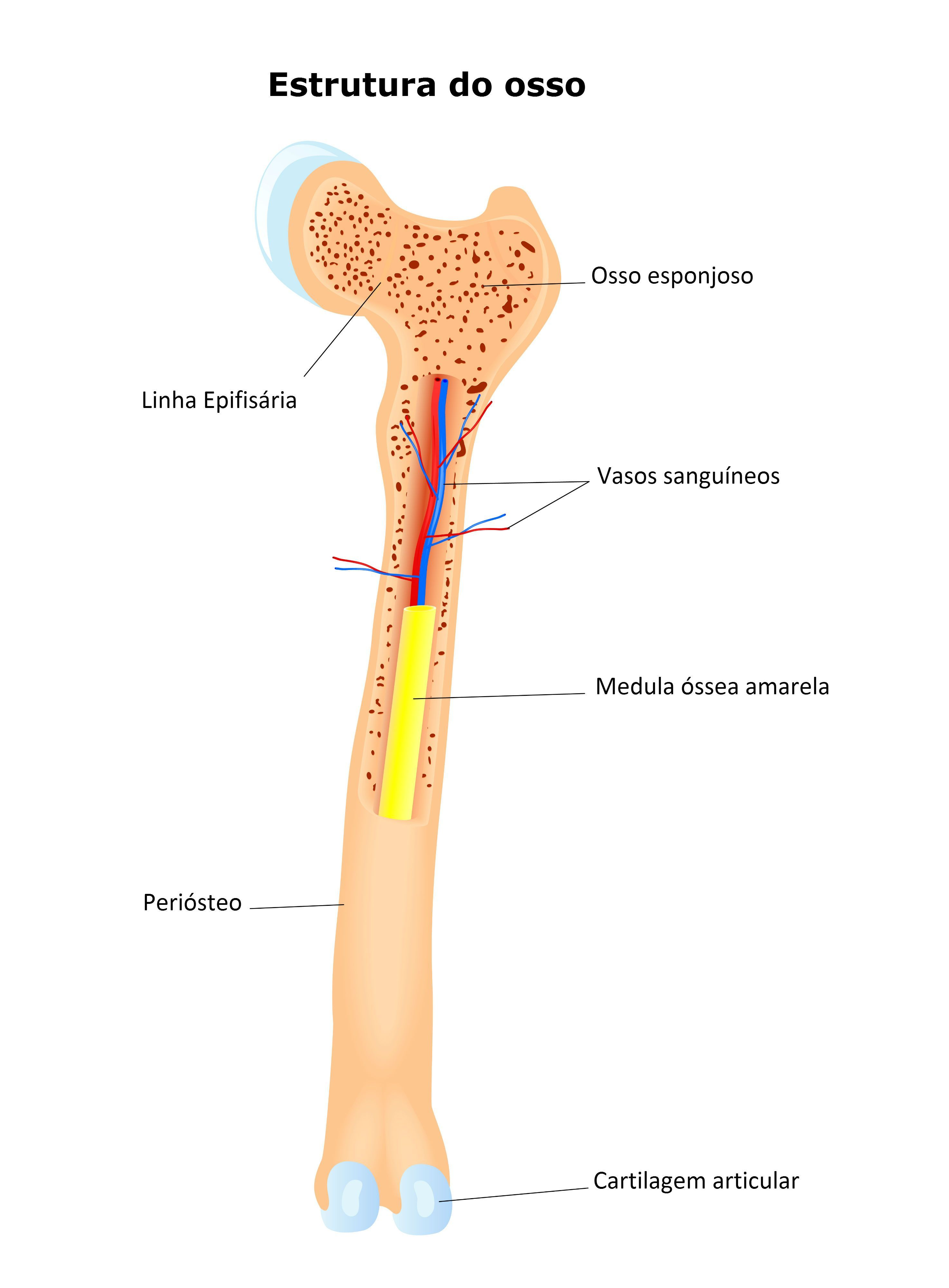 Sistema Esquelético | anatomia | Pinterest | Sistema esquelético ...
