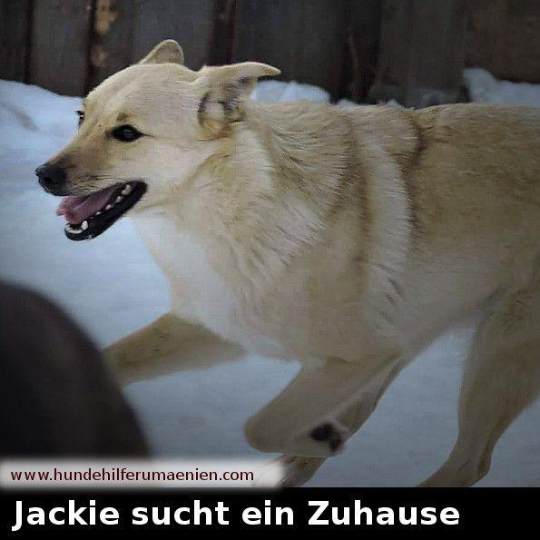Jackie Sucht Ein Zuhause Hunde Vermittlung Tierschutz Hunde Hunde In Not