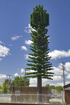 Fake Tree Cell Tower  Horribly Done Antenna Covers  Looks Like The Permit  Office Was Asleep When They Approved It.