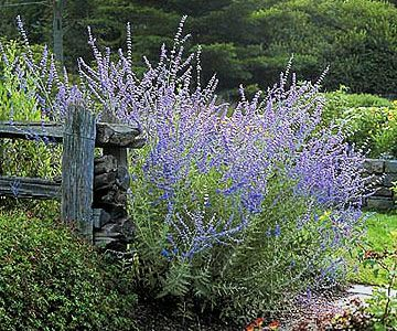 Our 17 Favorite Perennials That Thrive in Shady Gardens #shadeperennials