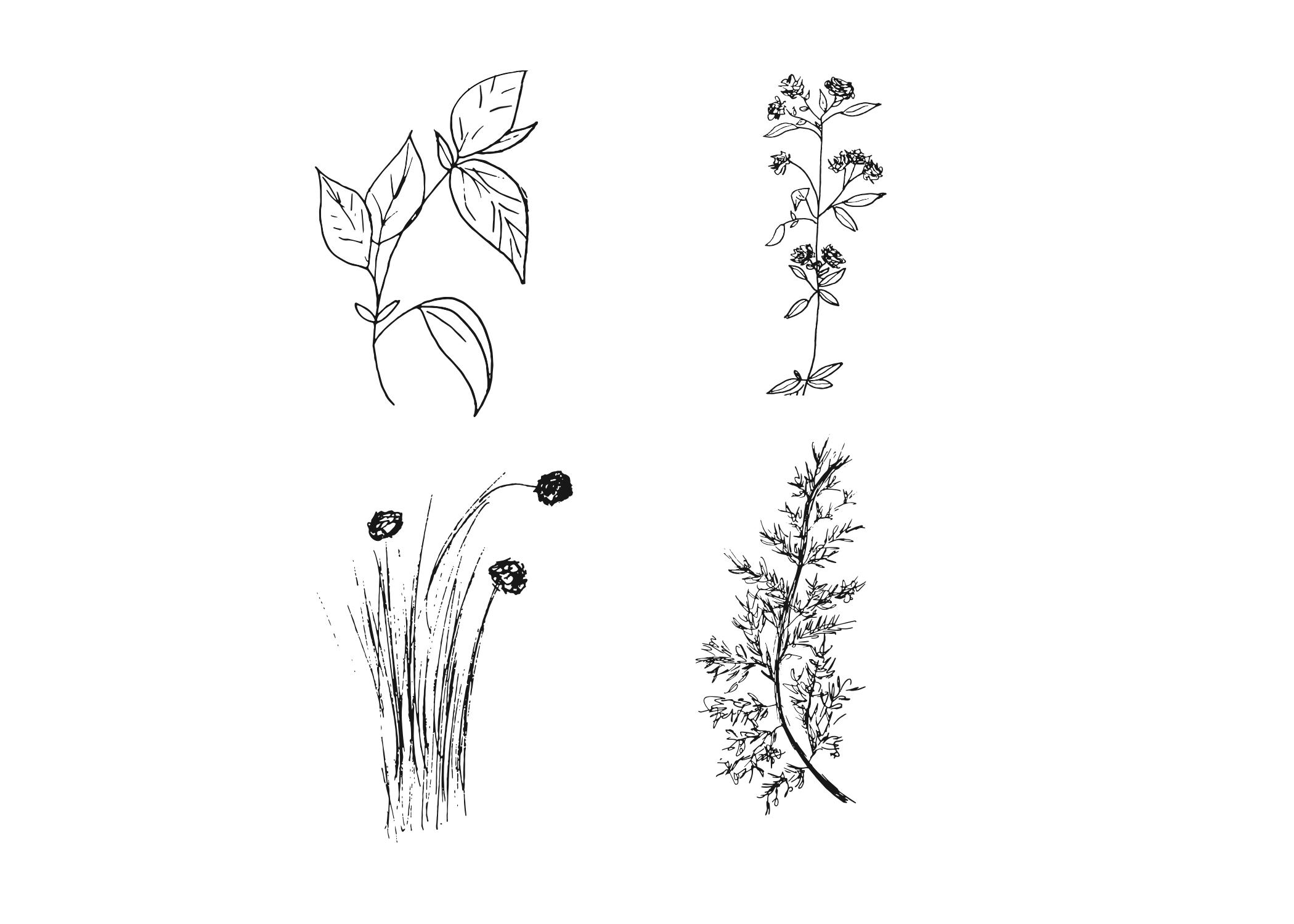 Hand Drawn Plants Minimalistic Drawing Tattoo Ideas Simple Art Illustration Illustrationartis Simple Art How To Draw Hands Illustration Art Kids