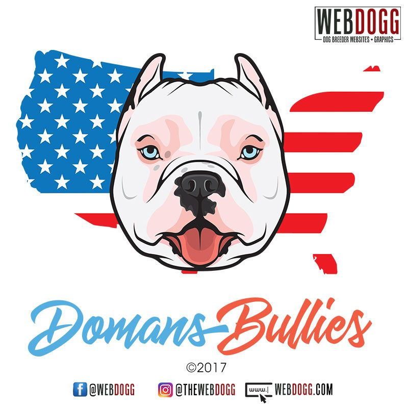 Domans Bullies American Bully Kennel Dog Breeder Logo Design