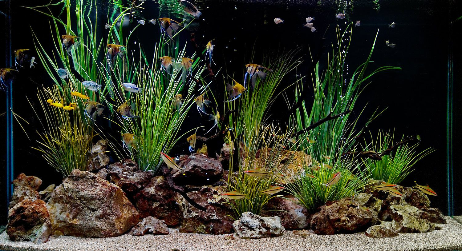 Freshwater fish aquarium accessories - Freshwater Aquarium Design Ideas Aquarium Design Group Custom Aquarium Design Installation And Service