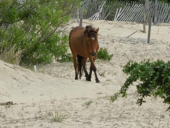 spain wildflower scenery | Beautiful Scenery - Picture of Wild Horse Adventure Tours, Corolla
