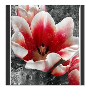 Abstract Tulip Shower Curtain  A beautiful artistic tulip photograph $45.99 #podpinparty #designsbyalondra