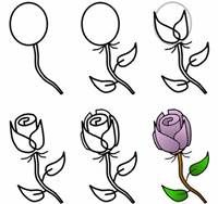 How to draw a rose how to draw art basics pinterest rose how to draw a rose mightylinksfo