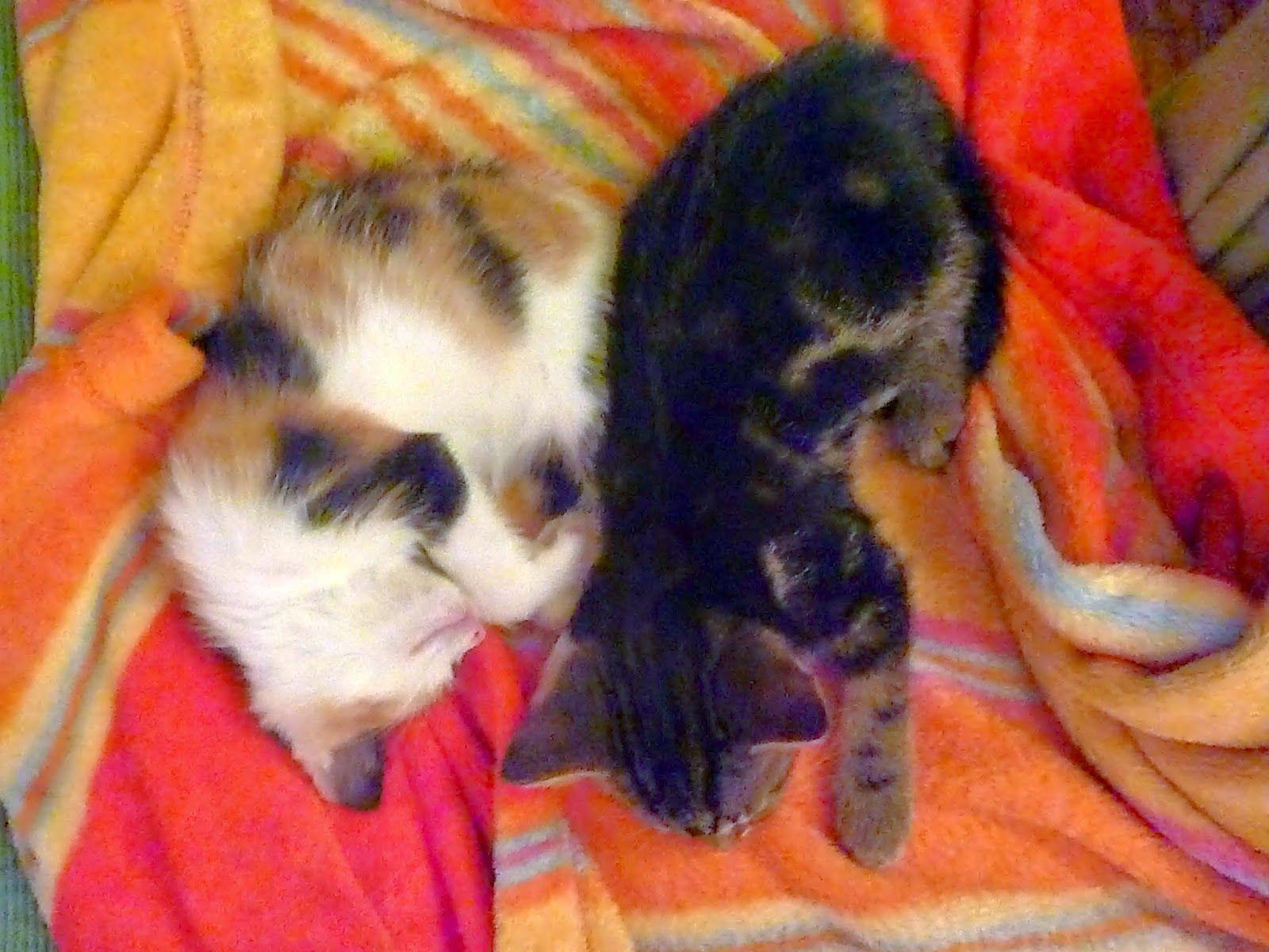 Habl Katzen - Cats finest: Das Leben an und für sich selbst
