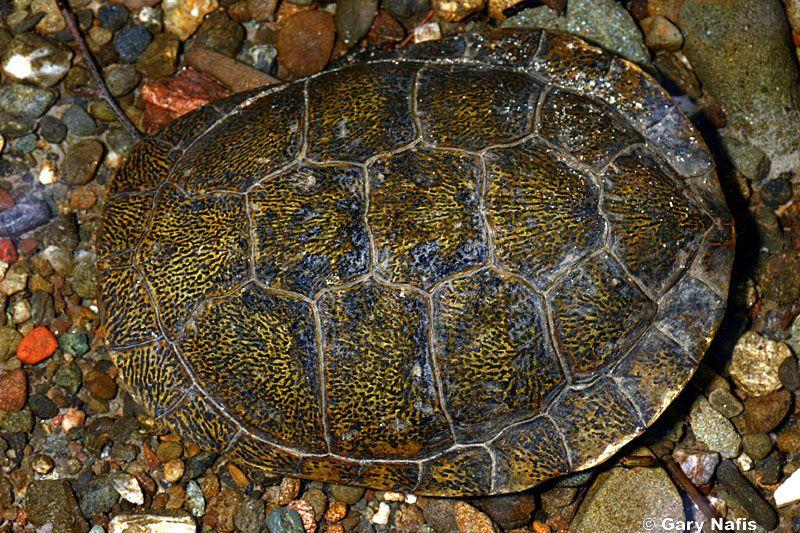 turtle shell pattern - 800×533