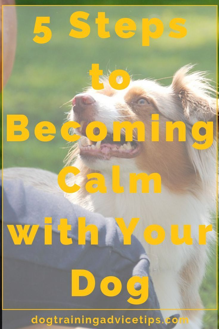 5 steps to calm with your dog dog training