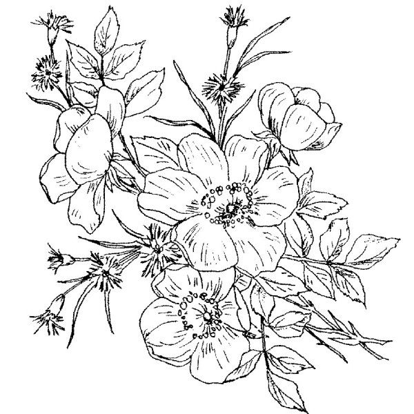 Rose Bouquet Drawing 7gzsoyw9 Jpg 600 600 Pixels Flower Bouquet Drawing Wild Rose Tattoo Free Coloring Pages