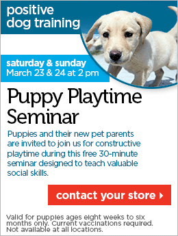 Free Puppy Playtime Seminar At Petco Free puppies