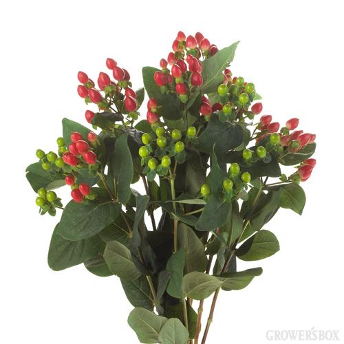 Flowers Hypericum Custom Box 100 Stems