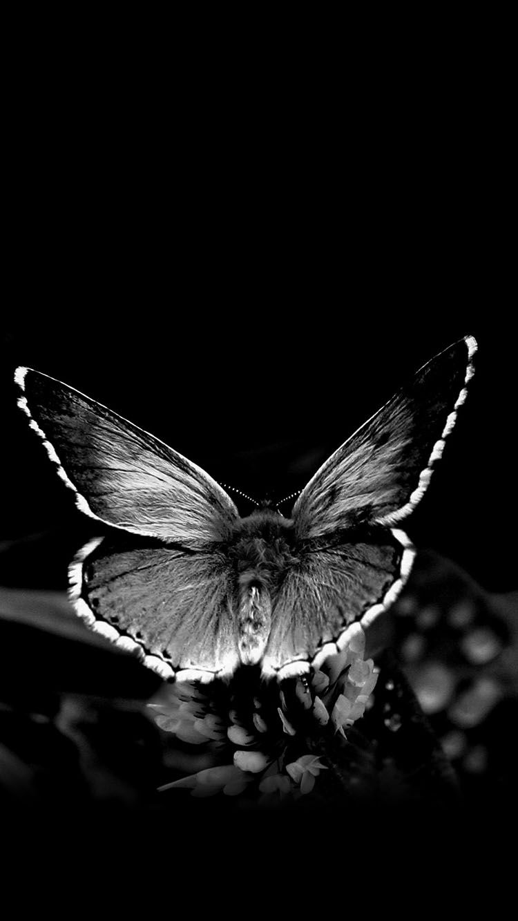 Idea By Ana Perfect On Butterflies ƹ ӂ ʒ Insect Photos Insect