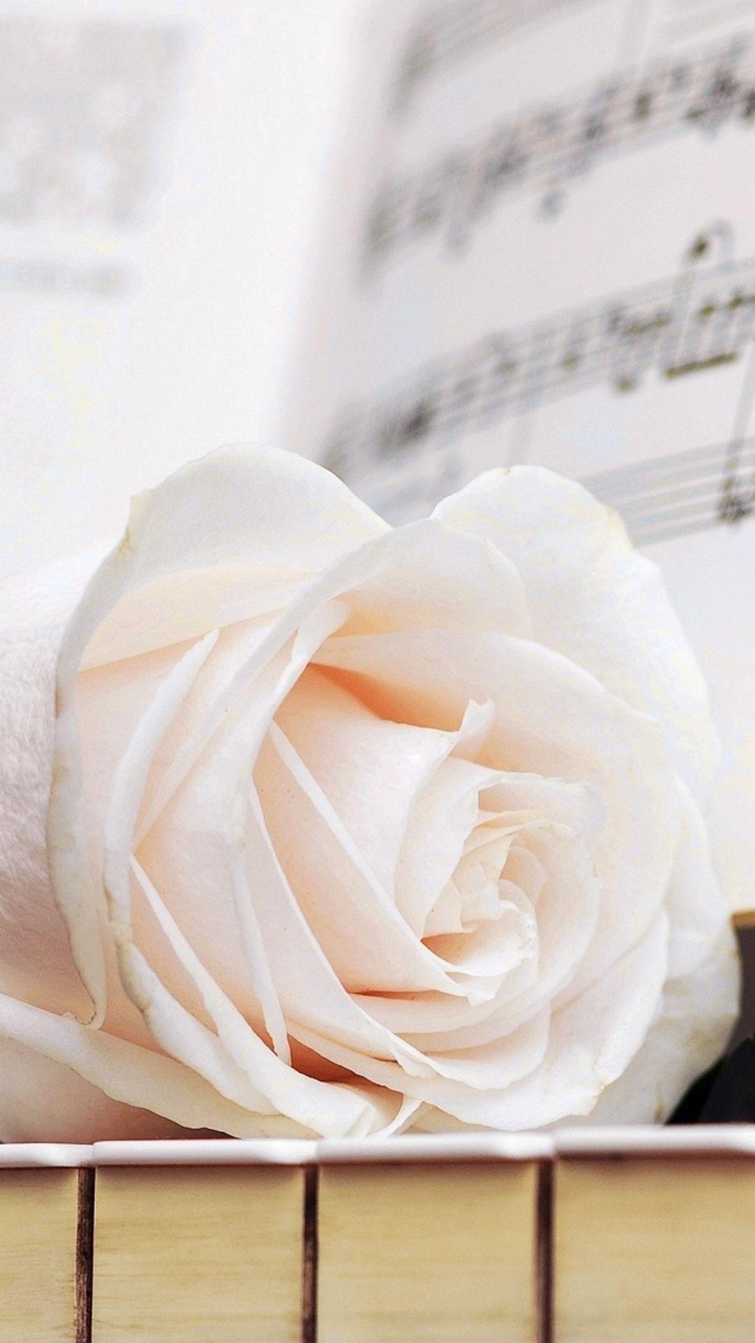 Pure Elegant Rose Flower Macro Music Note Book Piano