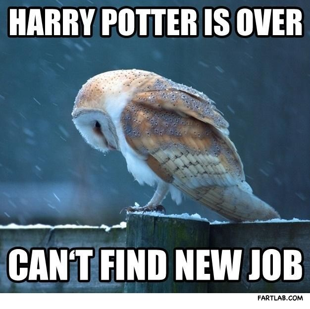 Harry Potter Is Over Does Not Compute Animals Animals Beautiful Owl