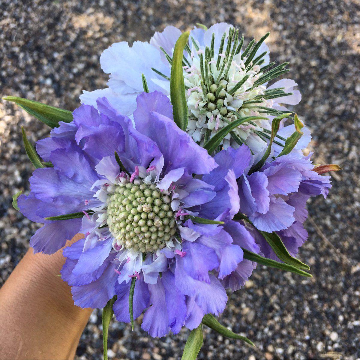 Laura LeBoutillier (GardenAnswer) Twitter Flower