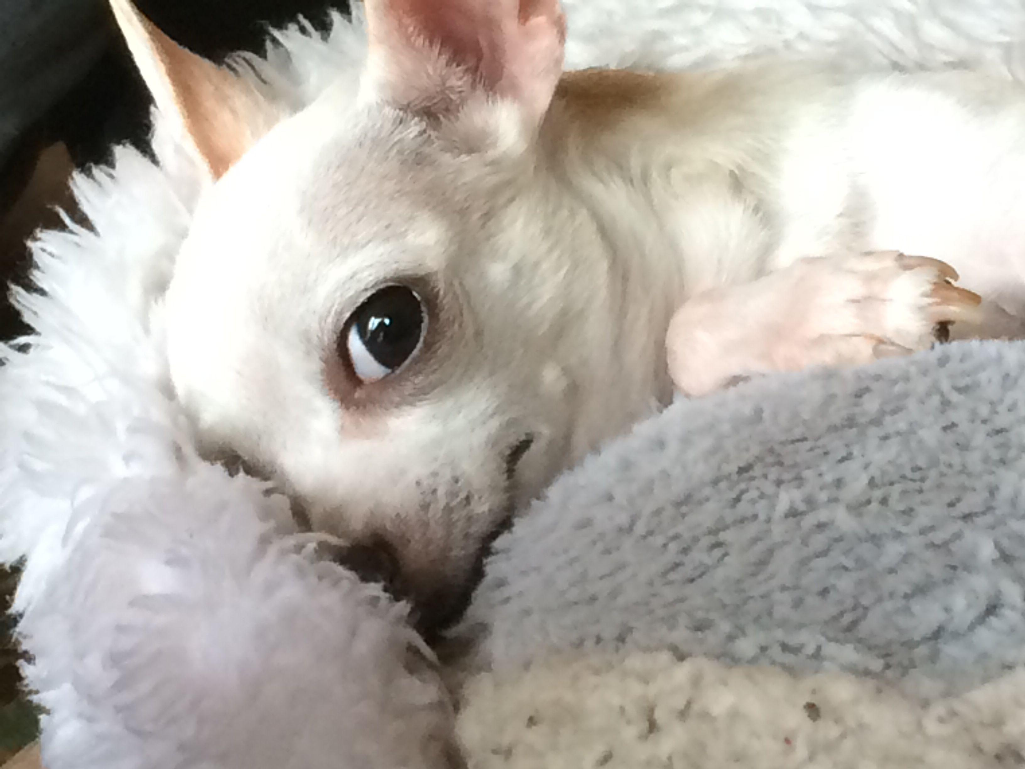 My puppies boudoir photo lol papita my love pinterest