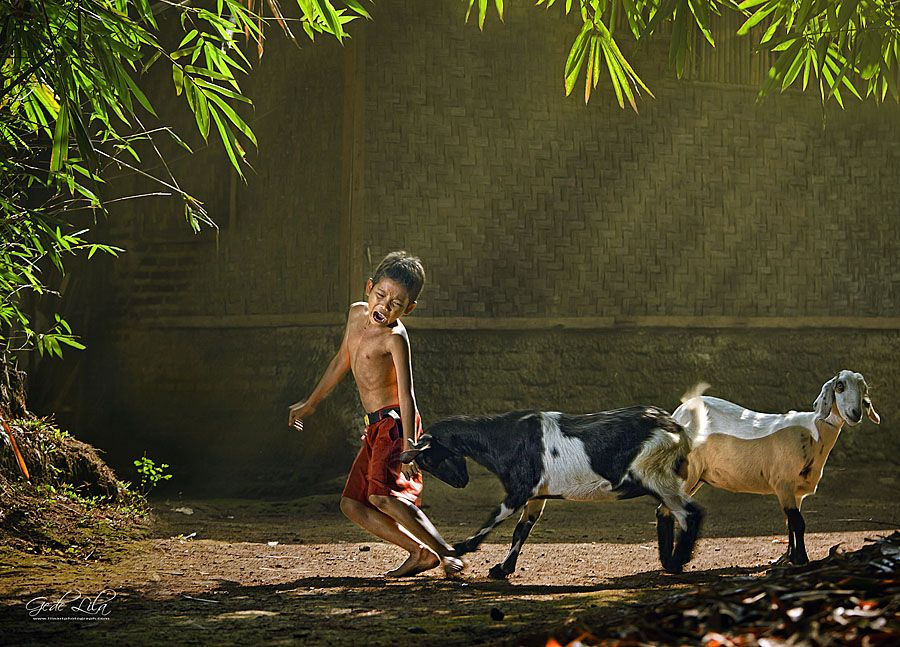 Goat Butting Hurts. | Village photography, Cute kids photography, Body painting festival