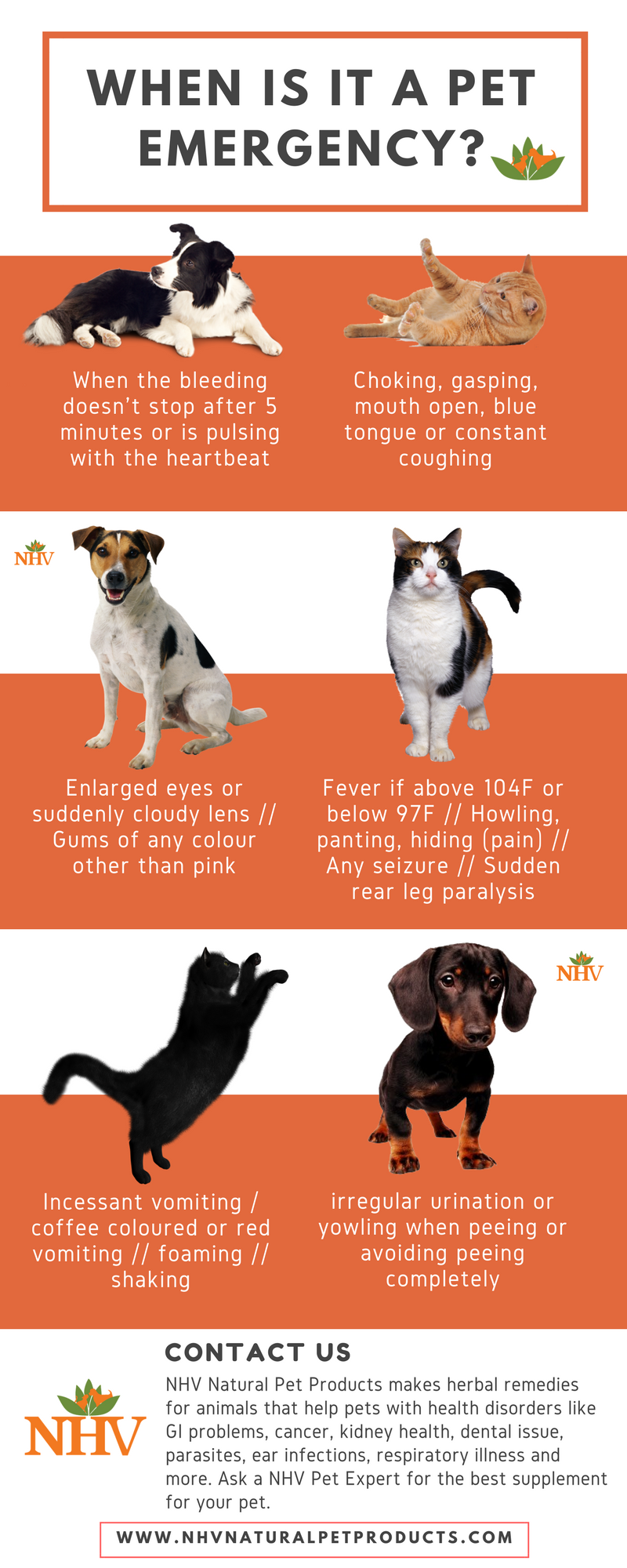 5 Signs Your Pet May Be Ill Pet Emergency Animal Infographic Pets