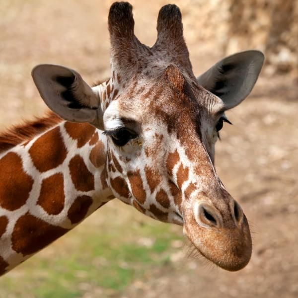 """Landlady """"Whoever guesses what's in my(exceptionally small) bag can take me out on Valentines""""  Drinker """"A giraffe""""  Landlady """"Close enough""""  """"Mrs Brown's Boys"""""""