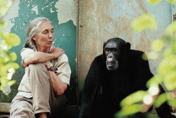 Happy birthday to primatologist, humanitarian and environmentalist Dr. Jane Goodall! Thank you for your activism and dedication!