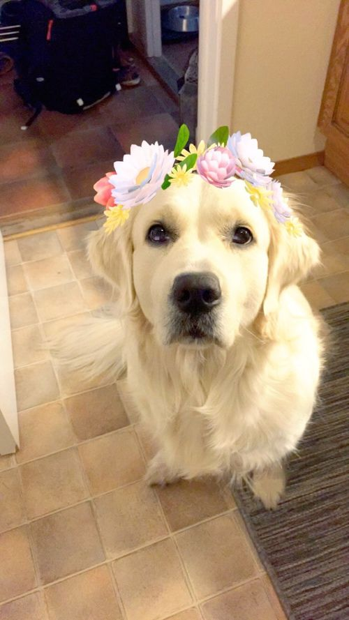 how to put flower crown on snapchat
