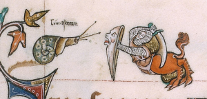 BLL_Add49622_f179r_d On f. 179r, upper marginalia, the (dextral) snail is confronting a hybrid of a lion with a knight. The knight has his scimitar ready for attack, his lion-head shield in front of him. Very interestingly, above the snail is a text which reminded me of the French word 'limaçons'; in the end it turned out to be an Anglo-Norman word for snail ('limaceoun') [2]. It remains a bit unsure whether this was used in those days for sea snails, land snails, or both
