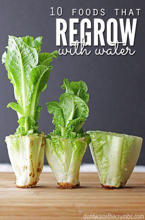Gemüse wieder wachsen lassen