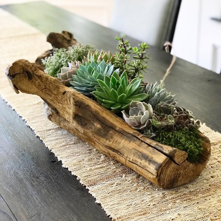 Driftwood DESERT ROSE SUCCULENTS Décoration plantes